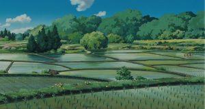 rizières - Miyazaki - Tonari no Totoro